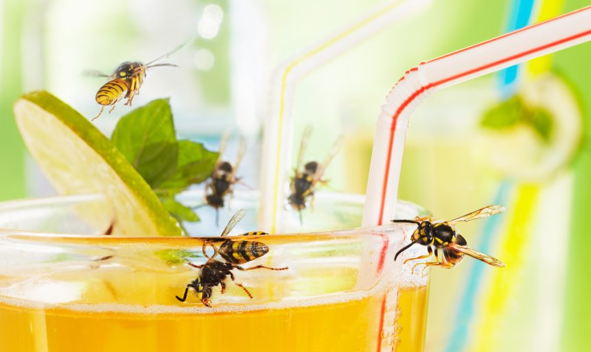 preventing wasp infestations