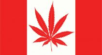 the cannabis act