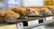 Pest control in facilities