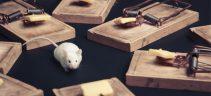 Mice Pest