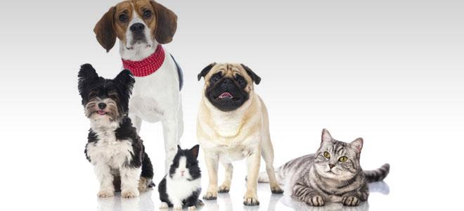 pet restrictions