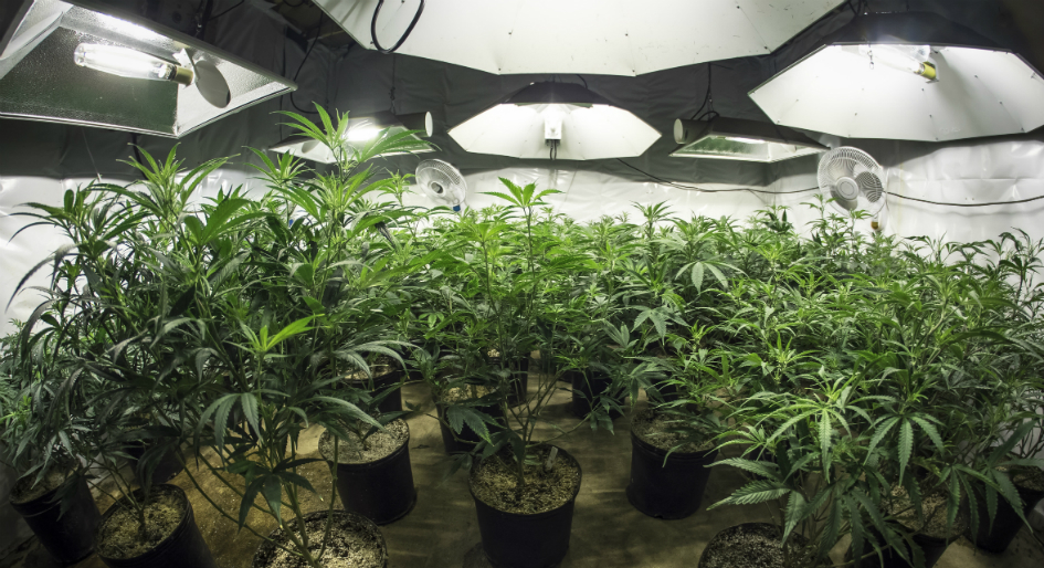 utilitarianism and legalizing marijuana There are two opposing positions: for the legalization of medical marijuana and against the legalization of medical marijuana  from a utilitarian perspective, the .