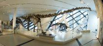 Royal Ontario Museum ROM