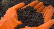 soil sample results