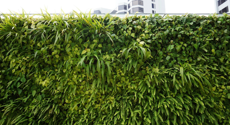 Living Walls Boost Air Quality And Wellbeing