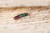 pest prevention