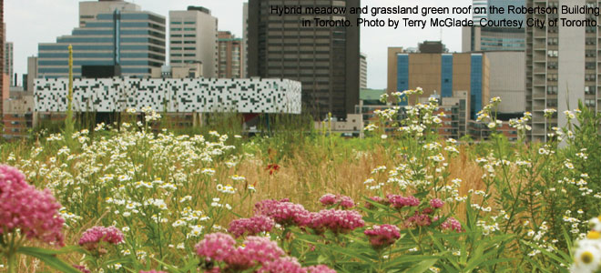 Toronto A Leader In Green Roof Industry